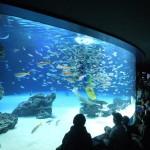 所沢キャンパス校外学習 サンシャイン水族館
